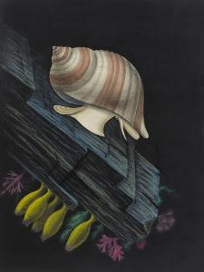 Purpura Lapillus: Dog Whelk by Philip Henry Gosse