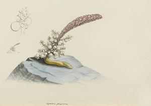 Spadix Purpurea: Hydroid by Philip Henry Gosse