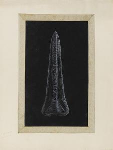 Untitled: Urchin by Philip Henry Gosse