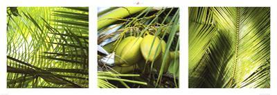 Palm Leaves by Philip Plisson