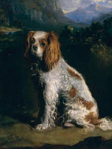 A King Charles Spaniel by Philip Reinagle