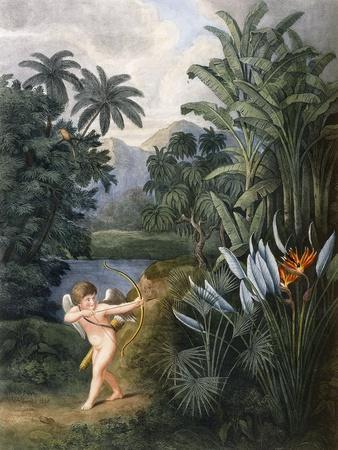 And Then Divine Linnaeus , C.1796-1807