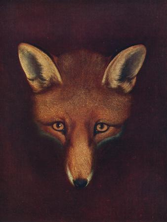 'Renard the Fox', c1800, (1922)