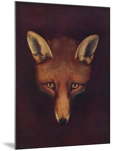 'Renard the Fox', c1800, (1922) by Philip Reinagle