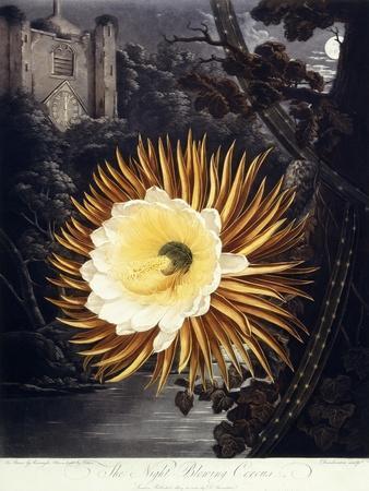 The Night Blowing Cereus, 1800