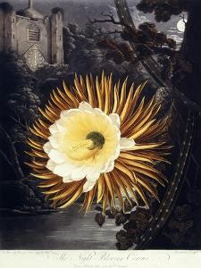 The Night Blowing Cereus, 1800 by Philip Reinagle