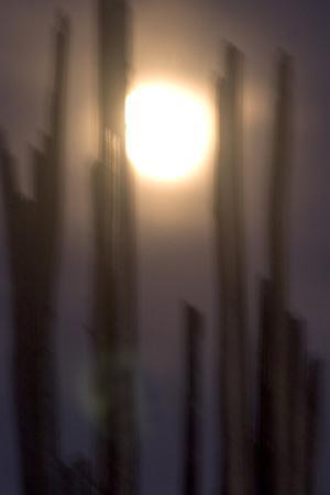 A Saguaro Cactus, Carnegiea Gigantea, with Full Moon in Sky in Saguaro National Park