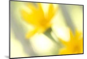 Abstract of Wildflower in Early Morning in the Inyo National Forest, California by Philip Schermeister