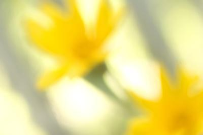 Abstract of Wildflower in Early Morning in the Inyo National Forest, California