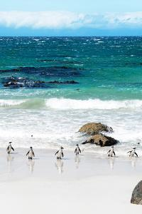 Awesome South Africa Collection - African Penguins at Boulders Beach V by Philippe Hugonnard
