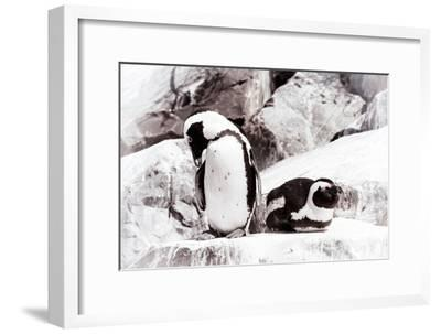 Awesome South Africa Collection - African Penguins II