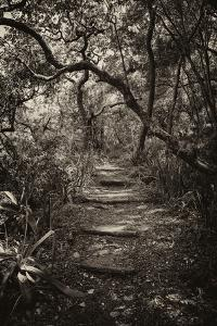 Awesome South Africa Collection B&W - African Forest I by Philippe Hugonnard
