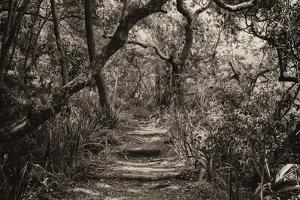 Awesome South Africa Collection B&W - African Forest III by Philippe Hugonnard
