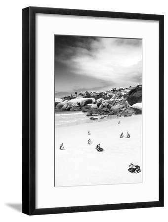 Awesome South Africa Collection B&W - African Penguins at Foxi Beach II