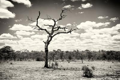 Awesome South Africa Collection B&W - Dead Tree in the African Savannah