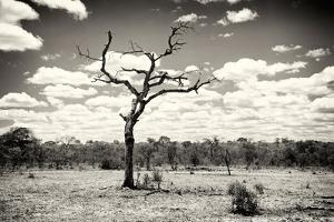 Awesome South Africa Collection B&W - Dead Tree in the African Savannah by Philippe Hugonnard