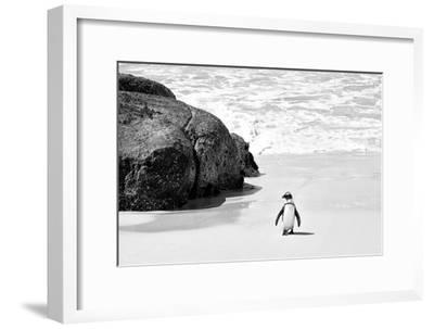 Awesome South Africa Collection B&W - Penguin at Boulders Beach II