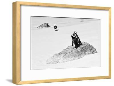 Awesome South Africa Collection B&W - Penguin Lovers II
