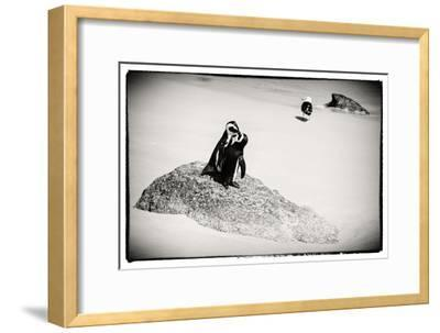 Awesome South Africa Collection B&W - Penguin Lovers
