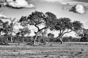 Awesome South Africa Collection B&W - Savanna Trees by Philippe Hugonnard