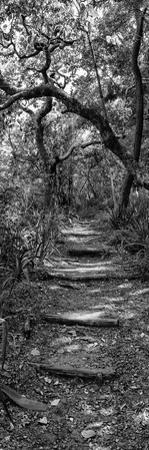 Awesome South Africa Collection Panoramic - African Forest B&W by Philippe Hugonnard
