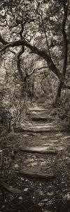 Awesome South Africa Collection Panoramic - African Forest II B&W by Philippe Hugonnard