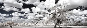 Awesome South Africa Collection Panoramic - Another Look Savannah II by Philippe Hugonnard
