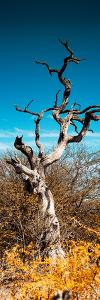 Awesome South Africa Collection Panoramic - Dead Tree II by Philippe Hugonnard