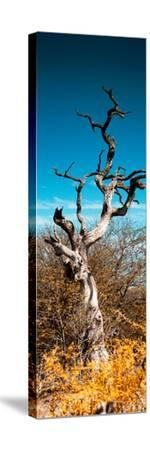 Awesome South Africa Collection Panoramic - Dead Tree II