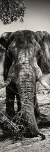 Awesome South Africa Collection Panoramic - Elephant Portrait II by Philippe Hugonnard