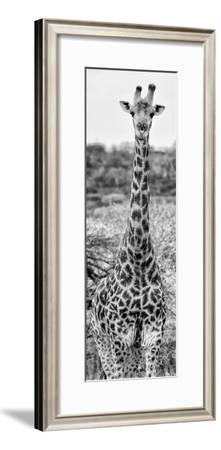 Awesome South Africa Collection Panoramic - Giraffe Portrait III B&W
