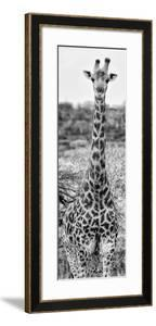 Awesome South Africa Collection Panoramic - Giraffe Portrait III B&W by Philippe Hugonnard