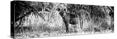 Awesome South Africa Collection Panoramic - Hyena B&W