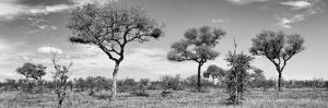 Awesome South Africa Collection Panoramic - Natural Beauty in Africa B&W by Philippe Hugonnard