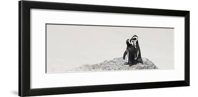 Awesome South Africa Collection Panoramic - Penguins Kissing