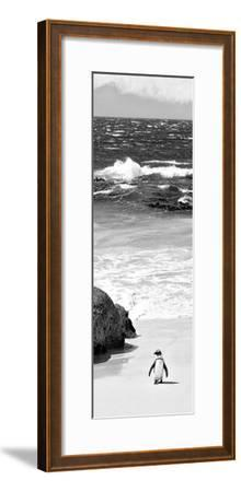 Awesome South Africa Collection Panoramic - Penguins on the Beach B&W