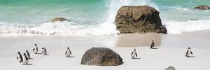Awesome South Africa Collection Panoramic - Penguins on the Beach II by Philippe Hugonnard