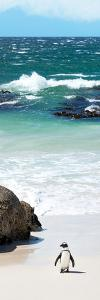 Awesome South Africa Collection Panoramic - Penguins on the Beach V by Philippe Hugonnard