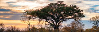 Awesome South Africa Collection Panoramic - Savannah Sunrise by Philippe Hugonnard