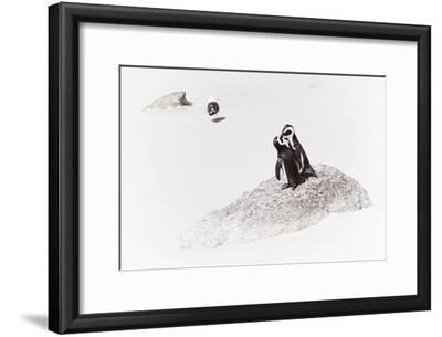 Awesome South Africa Collection - Penguin Lovers II