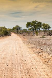 Awesome South Africa Collection - Road in the African Savannah I by Philippe Hugonnard