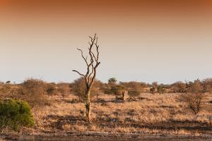 Awesome South Africa Collection - Savanna at Sunrise II by Philippe Hugonnard