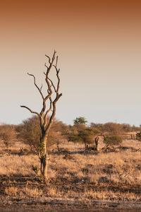 Awesome South Africa Collection - Savanna at Sunrise III by Philippe Hugonnard