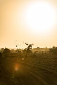 Awesome South Africa Collection - Savanna at Sunrise IV by Philippe Hugonnard