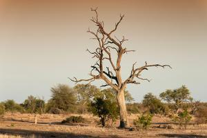 Awesome South Africa Collection - Savanna at Sunrise V by Philippe Hugonnard