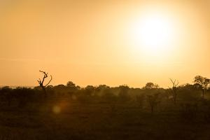 Awesome South Africa Collection - Savanna at Sunrise by Philippe Hugonnard