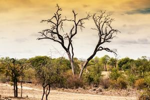 Awesome South Africa Collection - Savanna Tree at Sunset by Philippe Hugonnard