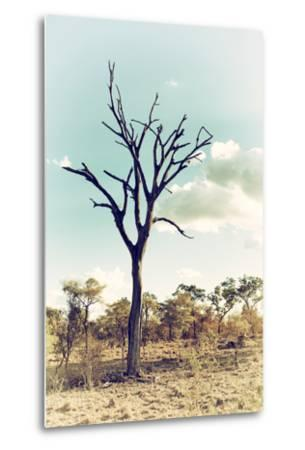 Awesome South Africa Collection - Savanna Tree III