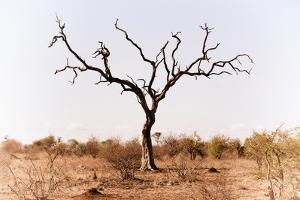 Awesome South Africa Collection - Savanna Tree IX by Philippe Hugonnard