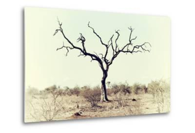 Awesome South Africa Collection - Savanna Tree X